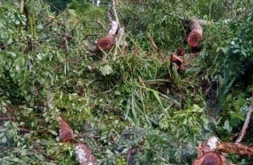 BLORA HITS : Aksi Sadis Maling Kayu di Blora, Mantri Hutan Disekap dan Disiksa
